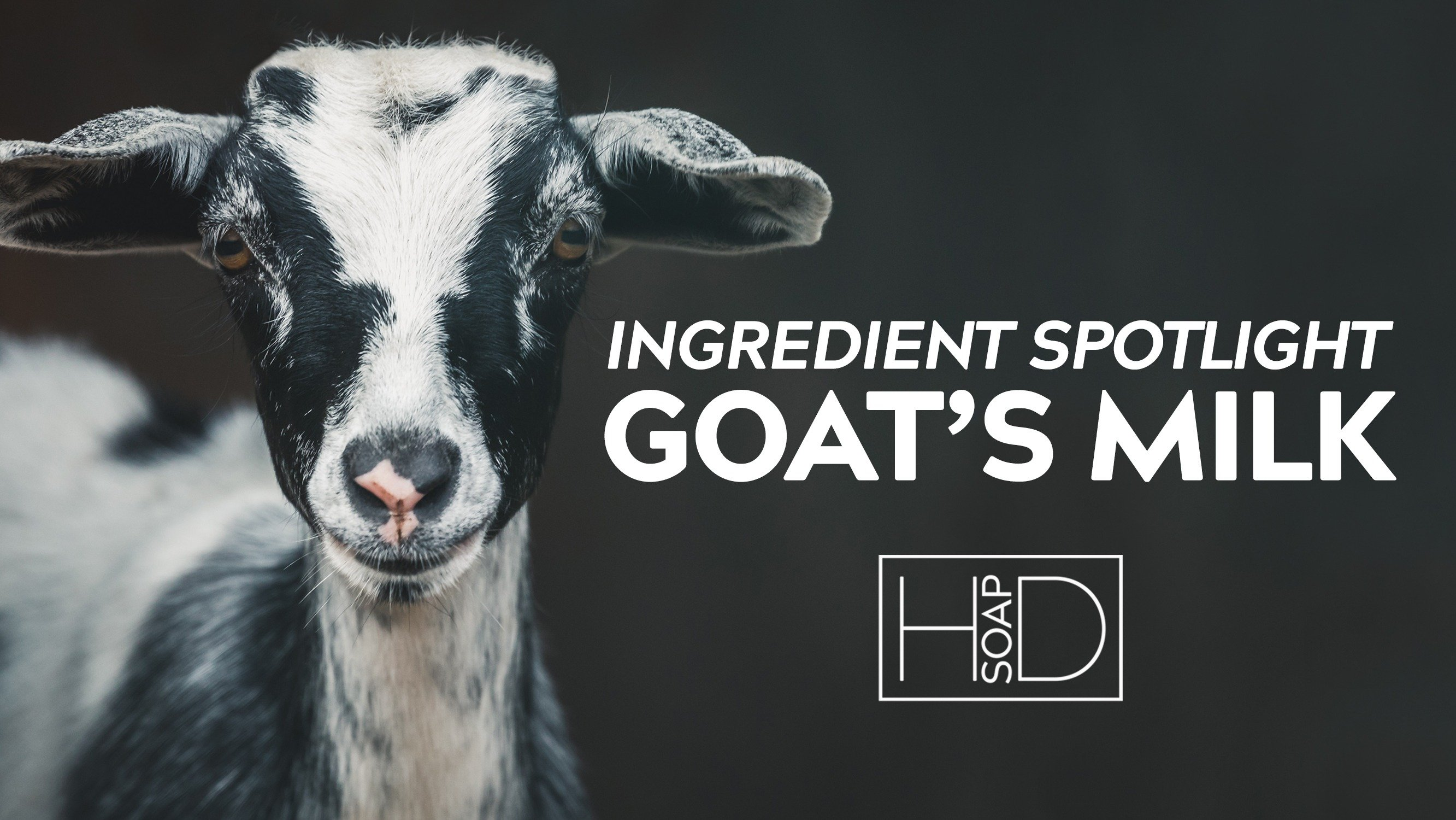 HD Soap | Ingredient Spotlight on Goats Milk