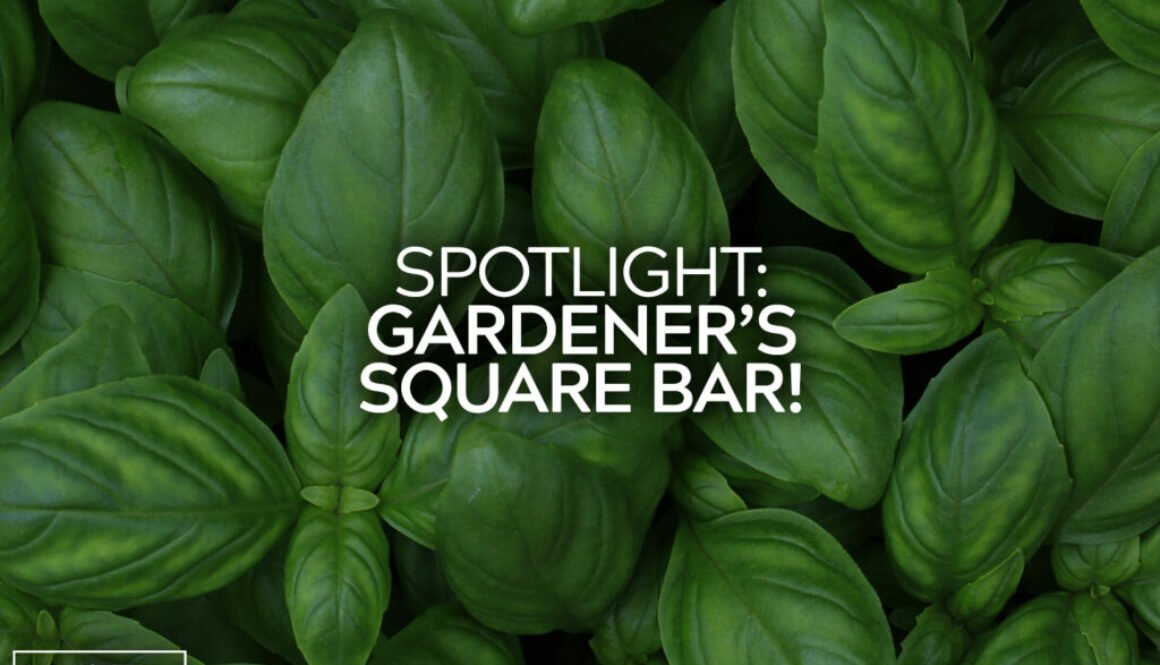 Gardeners Square Bar