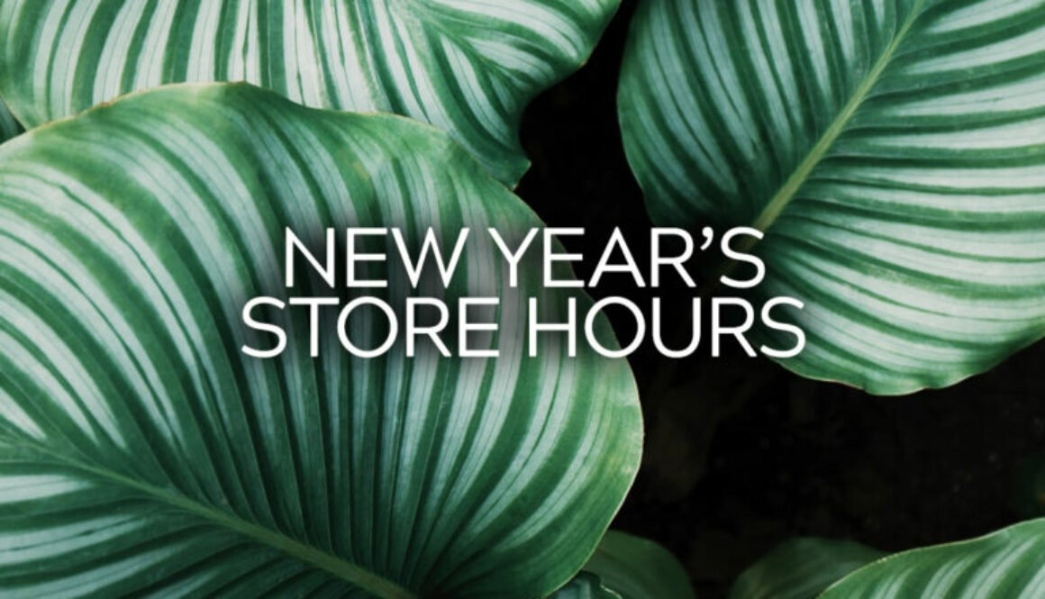 HD Soap | New Year's Store Hours