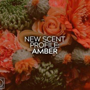 New Scent Profile Amber