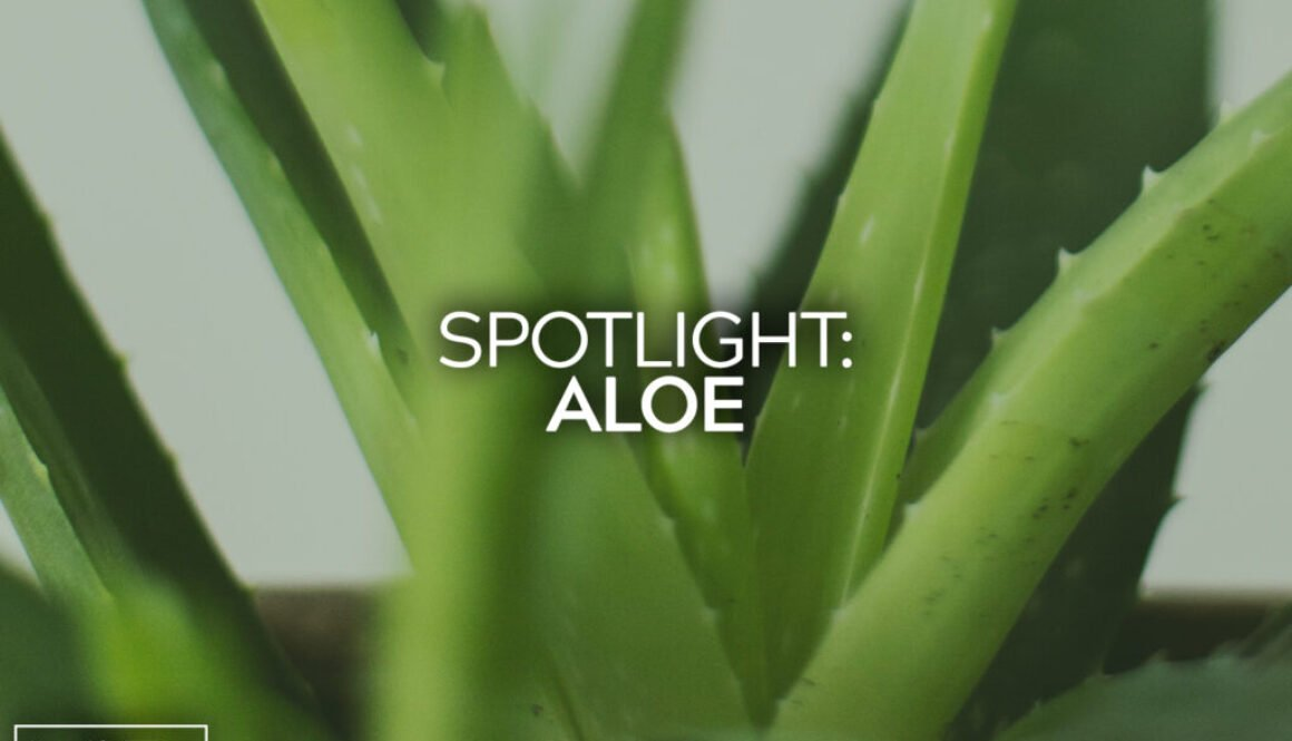 Spotlight Aloe
