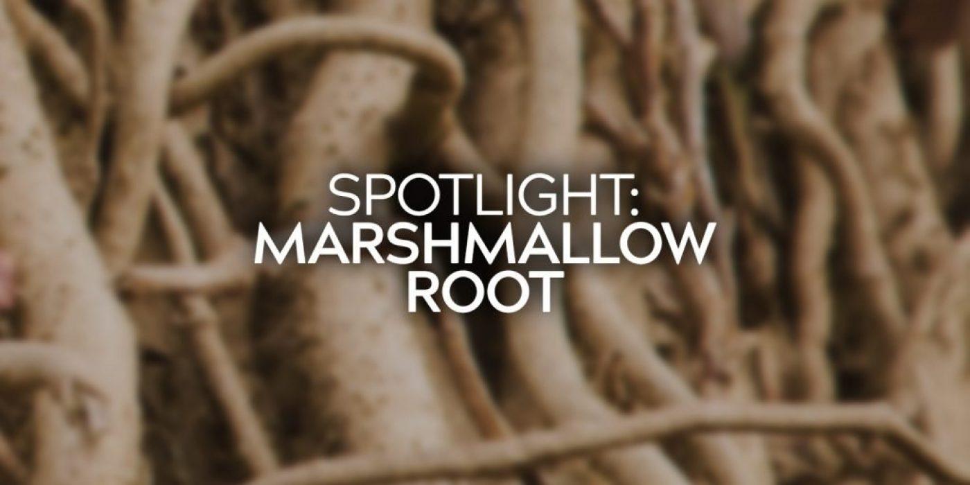Spotlight Marshmallow Root