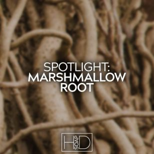 Spotlight Marshmallow Root