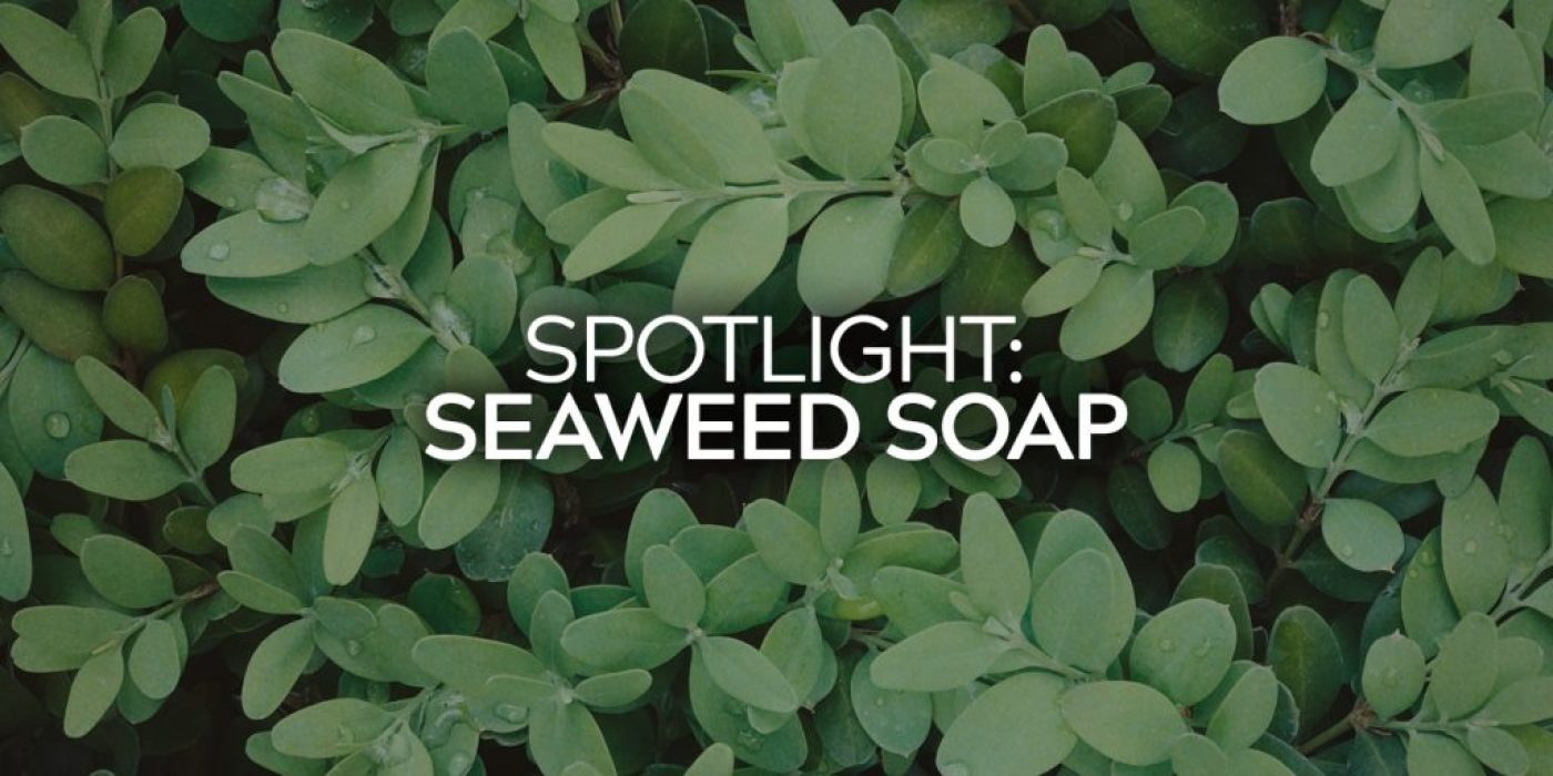 Spotlight Seaweed Soap