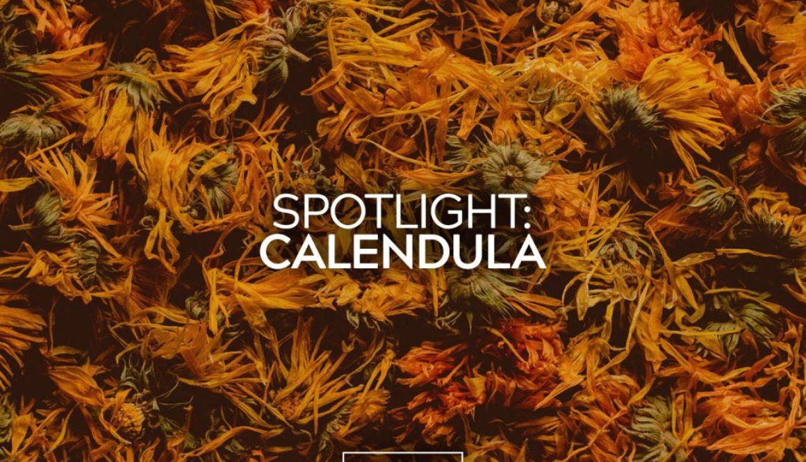 Spotlight: Calendula